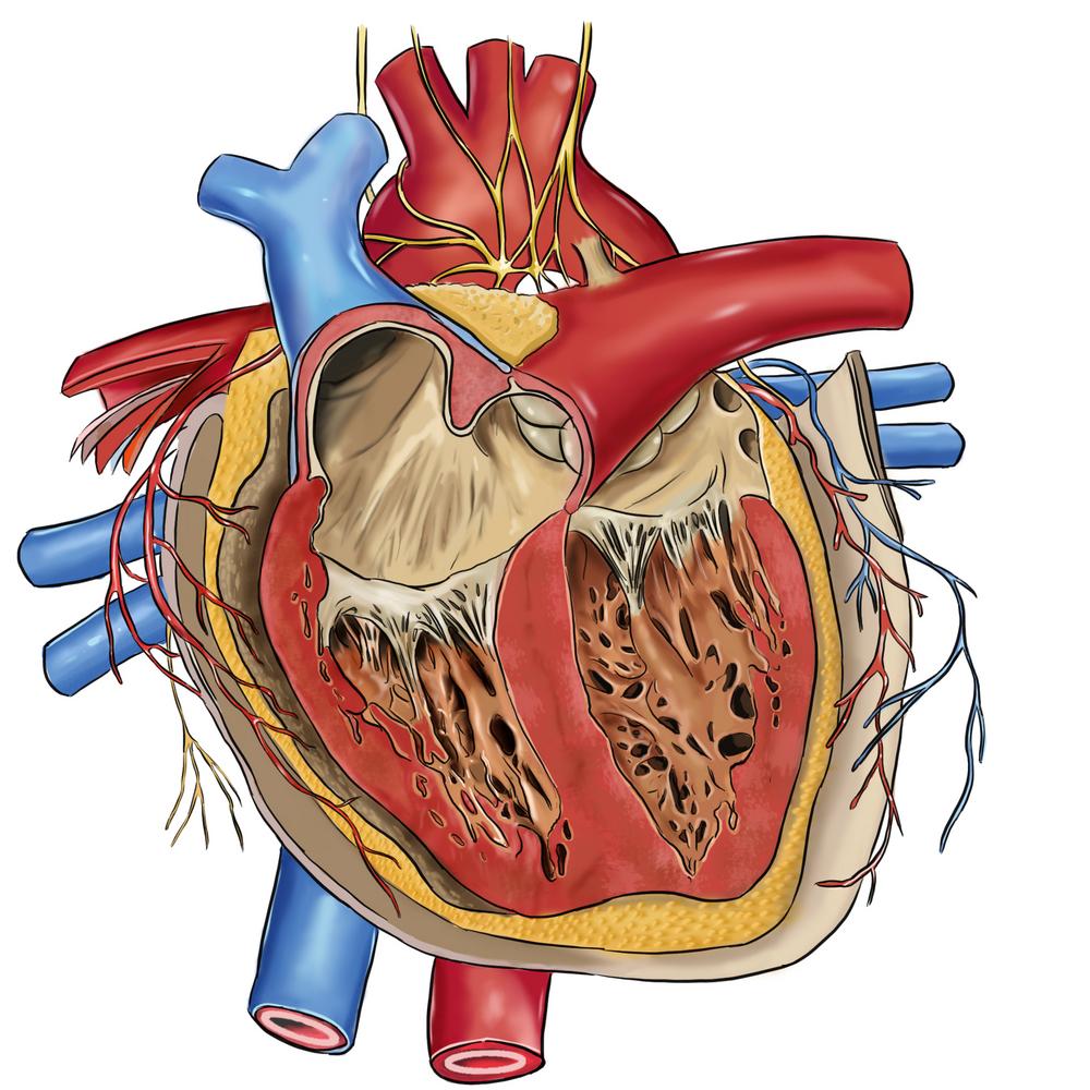 Herzinfarkt-Therapie - Facharztwissen