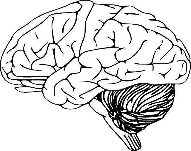 intelligenz und gehirn